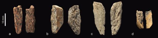 Distintos restos humanos analizados por el grupo interdisciplinario internacional. (Nature)