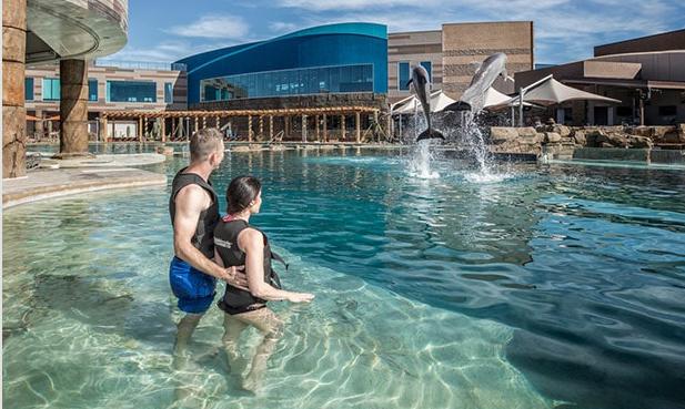 Los animales que fallecieron eran delfines botella, que pueden llegar a vivir entre 30 o 40 años (Foto: Dolphinaris Arizona)