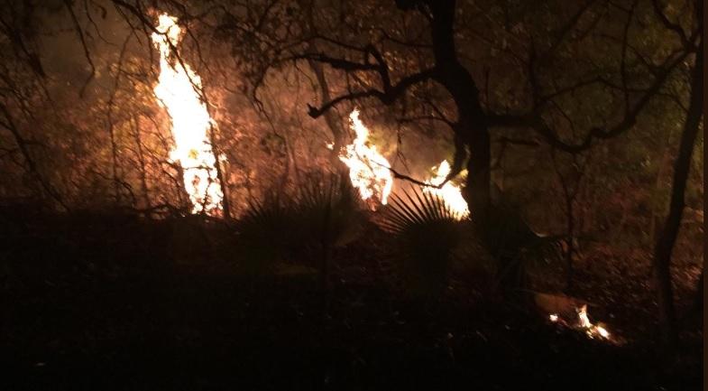 La Secretaría de Gobernación decretó el estado de emergencia en 11 municipios de Oaxaca por incendios forestales (Foto: Twitter @CEPCO_GobOax)