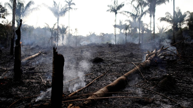 El fuego arrasó varios sectores de la Amazonía (REUTERS/Bruno Kelly)