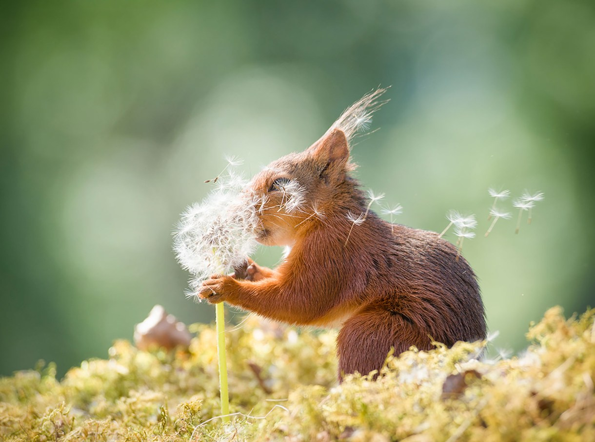 (Geert Weggen/ The Comedy Wildlife Photography Awards 2019)