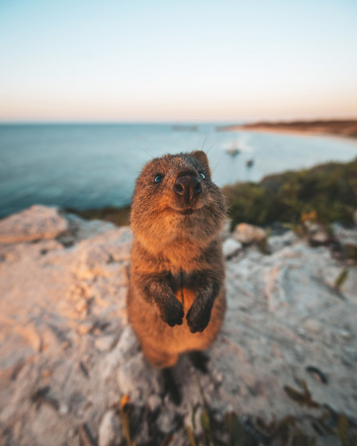(James Vodicka/ The Comedy Wildlife Photography Awards 2019)