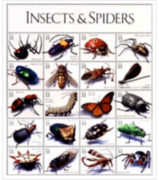Insect Identification Chart Entomology