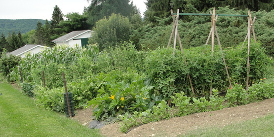 Cornell Cooperative Extension Zoom Class Planning Your Vegetable Garden