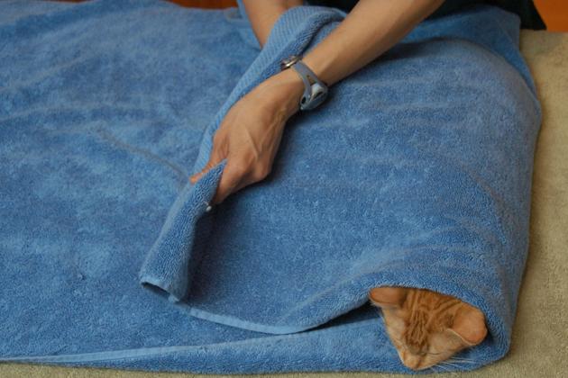 Passo 3 Cat toalha
