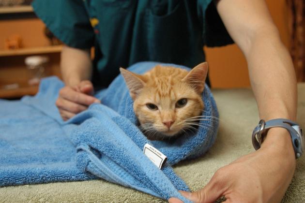 Passo 5 Cat toalha