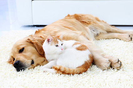 Whos Happier Indoor Cats And Dogs Or Pets Who Roam Free