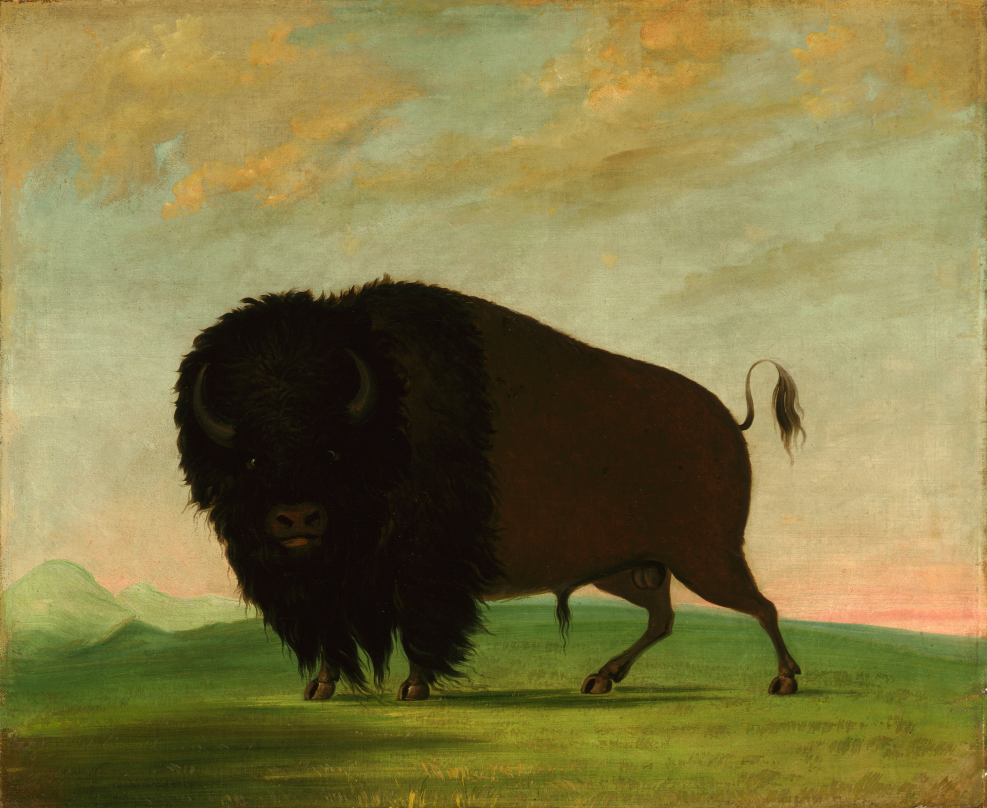 Fact Sheet Picturing The American Buffalo George Catlin