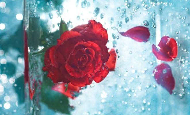 rose petal drink recipe