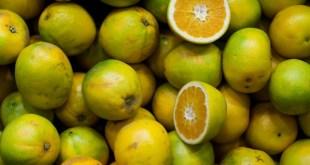 Seedless Fruit, is it healthy?