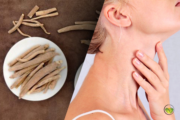 Ashwagandha Thyroid Benefits