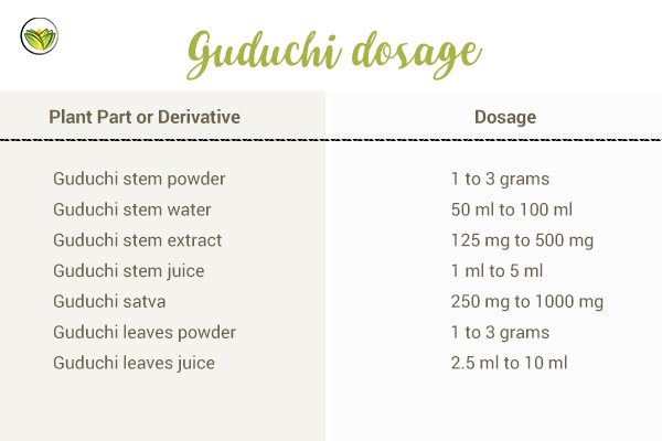 Guduchi Powder, Benefits, Side Effects, Contraindications +