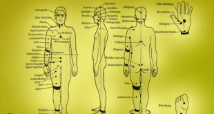 This graphic shows the Marma points throughout the body. How many Marma points are in the body?