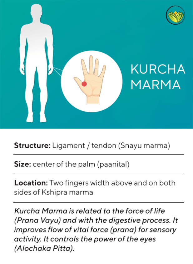Kurcha Marma, Marma points of the feet.
