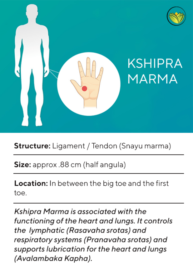 Kshipra Marma, Marma points of the feet.