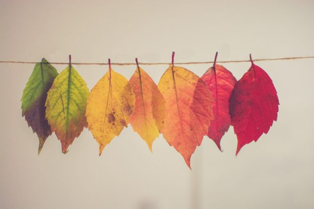 fall dinacharya daily routine