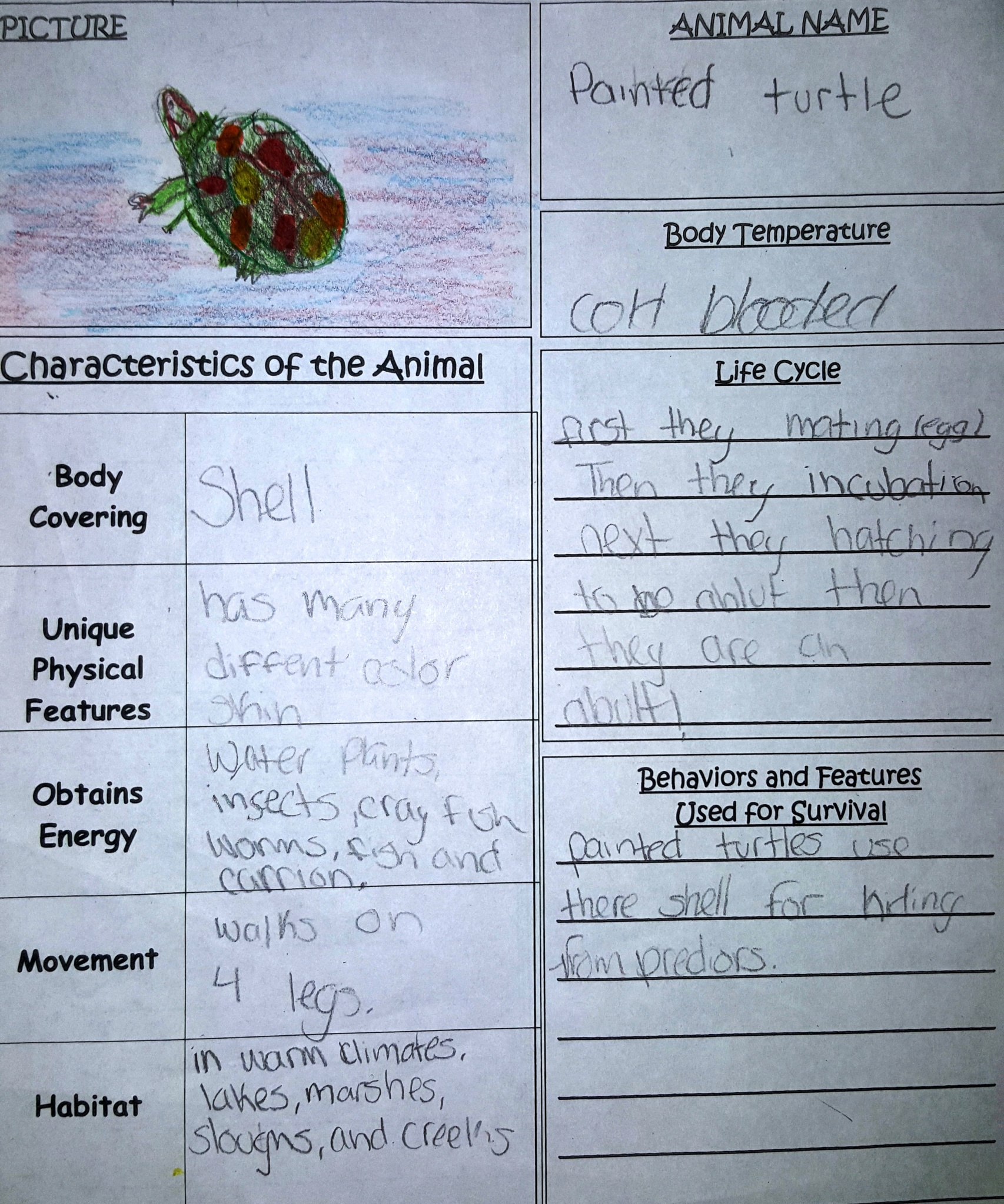 Lesson Day 2 Vertebrate Vs Invertebrate Animals