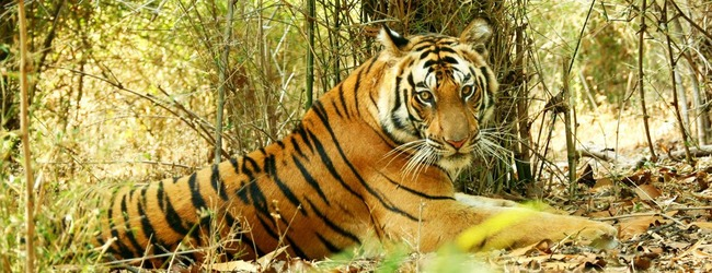 bandhavgarh-national-park-b2
