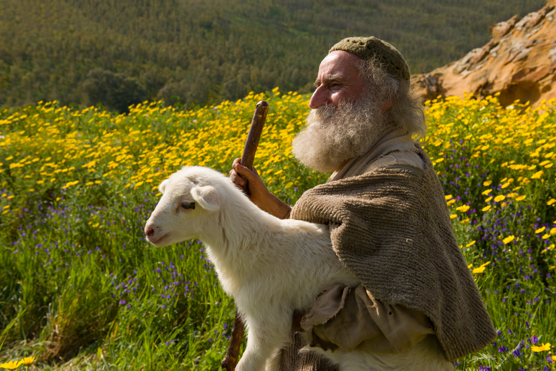 Bible Stories The Parable Of The Lost Sheep