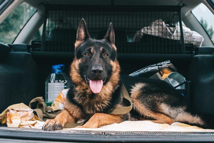 cane in auto per viaggiare