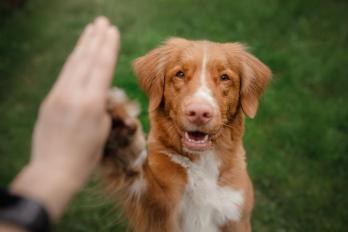 Clicker Training: Learn About Mark & Reward Dog Training Using Clickers