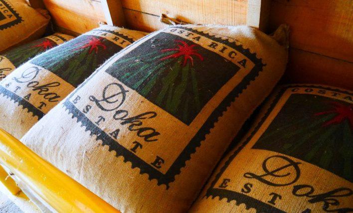 Conhecendo o café da Costa Rica | Chicken or Pasta?