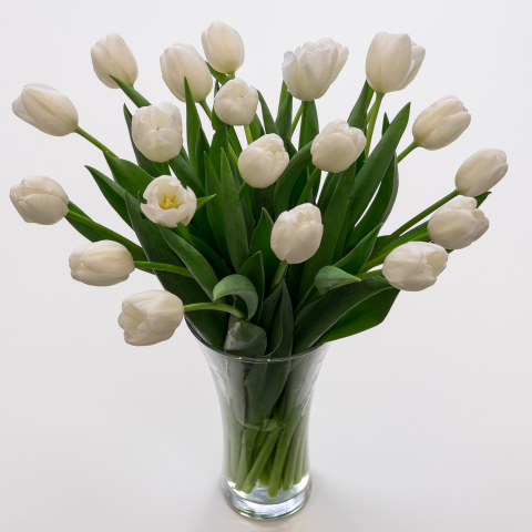 White Tulips  Fresh Flowers  Tulips com Purely White Tulips