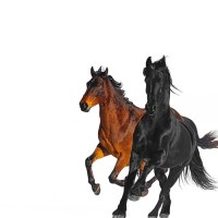 CHORDS: Lil Nas X feat. Billy Ray Cyrus - Old Town Road Piano & Ukulele Chord Progression and Tab