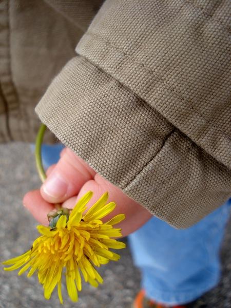 dandelion-in-childs-hand