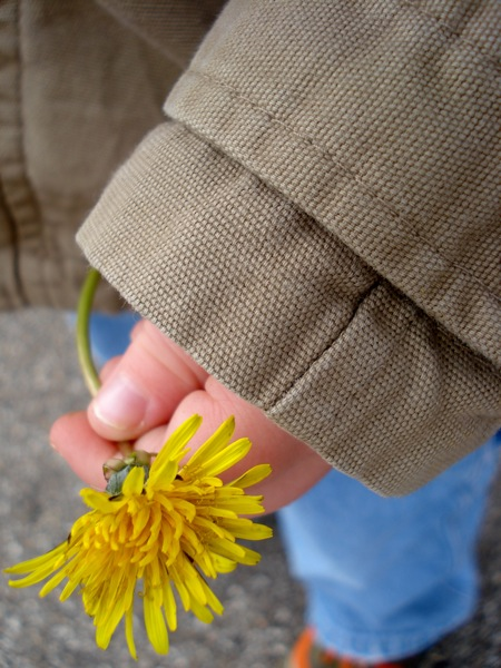 dandelion-in-childs-hand