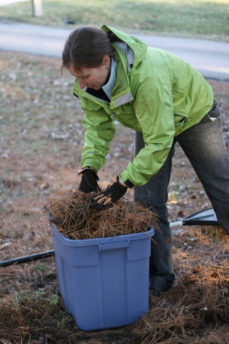 raking-pine-needles-2