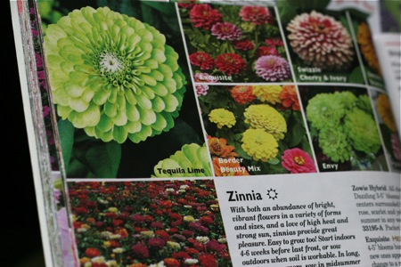 zinnia-in-catalog