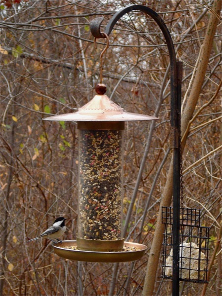 chikadee-at-feeder