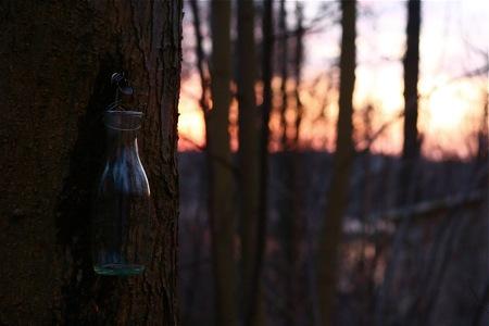 sunset-on-sugaring