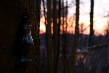 sunset-on-sugaring
