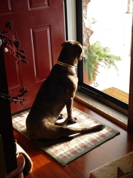 dog-in-doorway