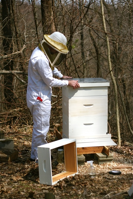 brian-setting-up-the-bee-hive