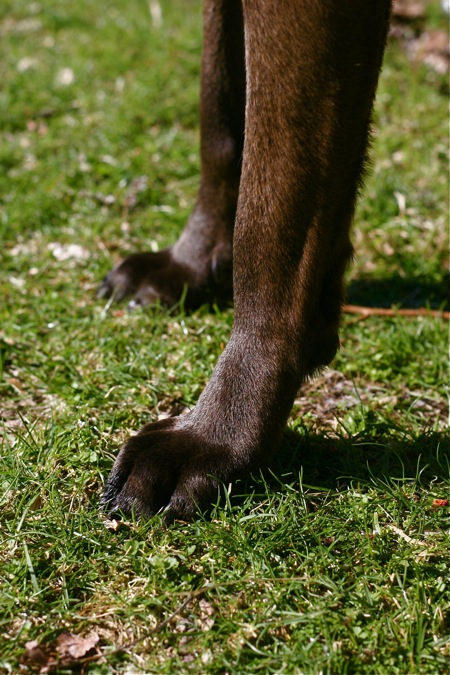 dog-feet-in-grass