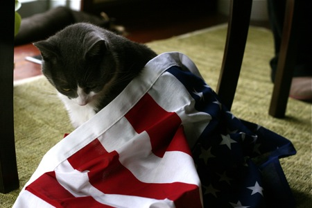 cat-draped-in-us-flag