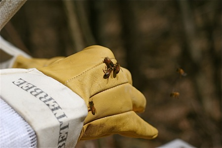 bees-on-gloves