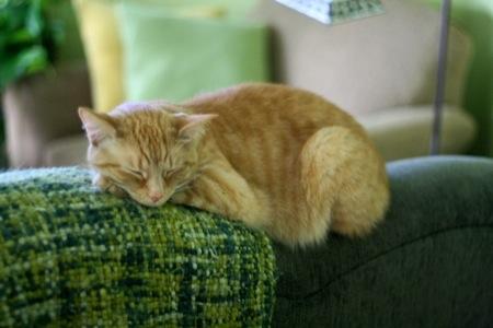 Orange_cat_sleeping
