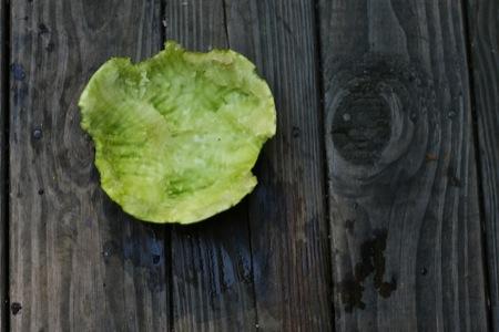 Watermelon_rind