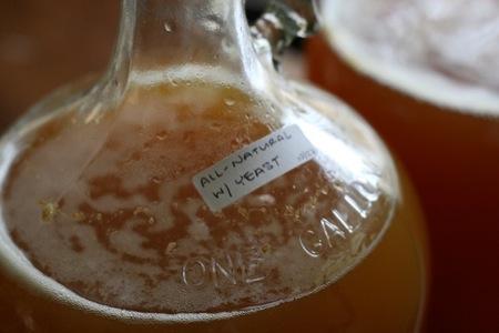 fermenting_apple_cider