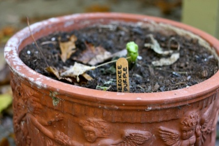empty_planting_pot