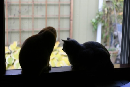 two_cats_in_window