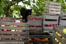 cat_on_apple_crates