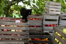 cat_on_apple_crates