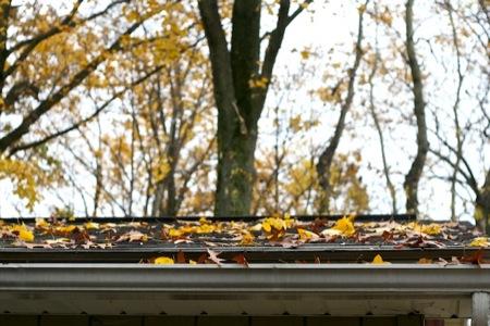leaf_filled_gutters