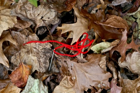 red_yarn_in_leaves