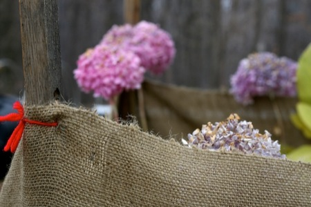 wrapping_hydrangeas_for_winter